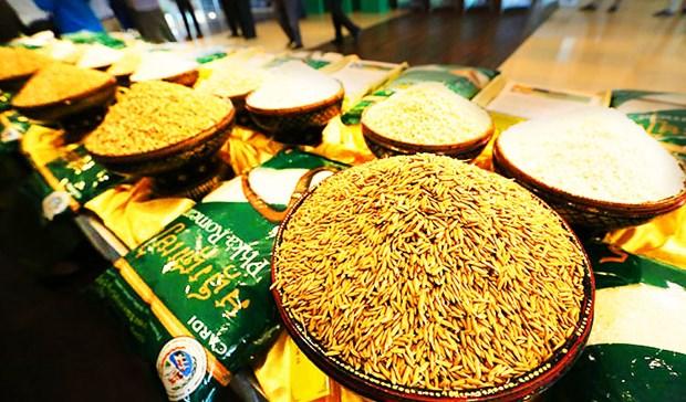 Le Cambodge exporte pour 264 millions de dollars de riz en six mois hinh anh 1