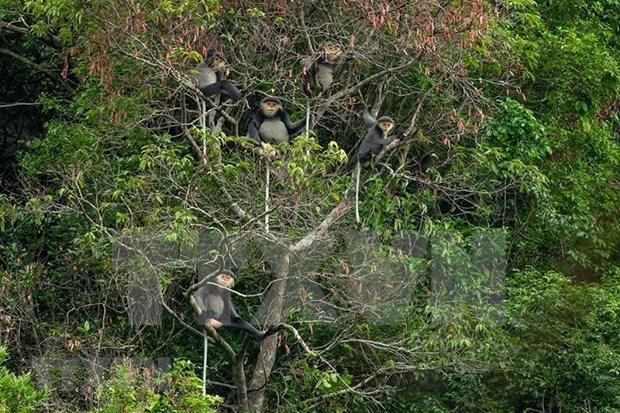 Kon Plong – un tresor de biodiversite a preserver hinh anh 1