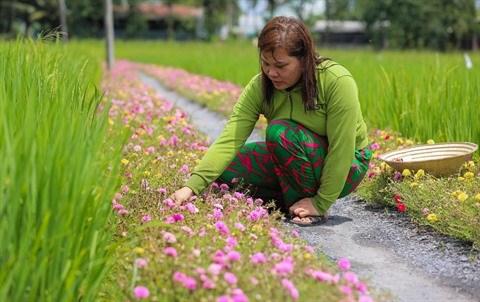Ho Chi Minh-Ville : des rues fleuries contre les dechets hinh anh 1