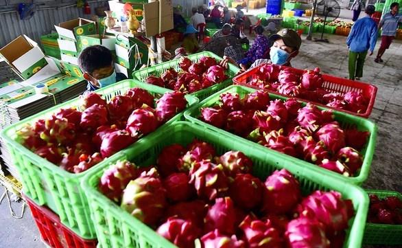 Exportations agricoles vietnamiennes vers l'UE en hausse hinh anh 1