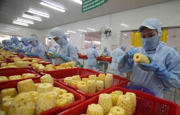 Fruits et legumes : le pays cible 10 milliards de dollars d'exportations d'ici 2030 hinh anh 1