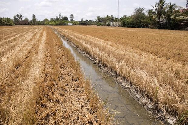 Des mesures pour lutter contre la secheresse et la salinisation dans le delta du Mekong hinh anh 1
