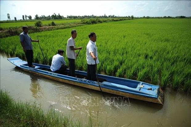 La province de Ca Mau construit des zones rizicoles de haute qualite hinh anh 1