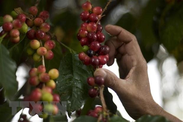 Un webinaire pour dynamiser le commerce Vietnam-Venezuela hinh anh 1