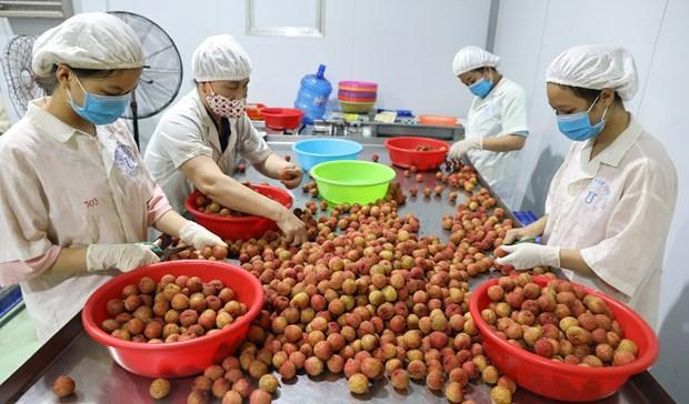 L'Australie cherche a booster les opportunites d'affaires avec le Vietnam hinh anh 1