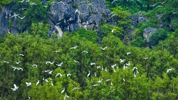 Le Vietnam et le WWF intensifient leur cooperation hinh anh 1