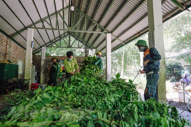 Centre de sauvetage et de conservation des especes sauvages precieuses de Cuc Phuong hinh anh 4