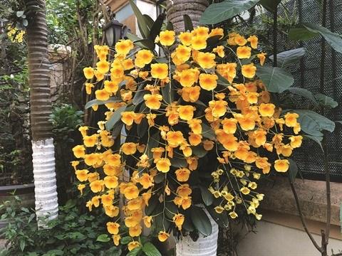 Les plantes d'ornement et leur signification hinh anh 1