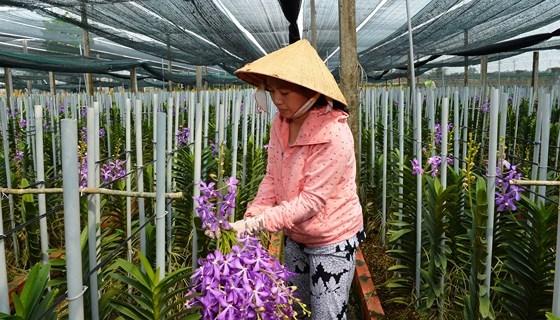 Les 10 evenements les plus marquants de Ho Chi Minh-Ville en 2018 hinh anh 2