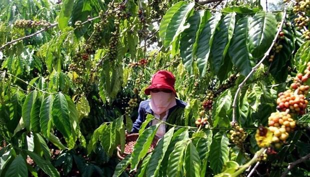 Agriculture : Objectif de plus de 42 milliards d'exportation en 2019 hinh anh 1