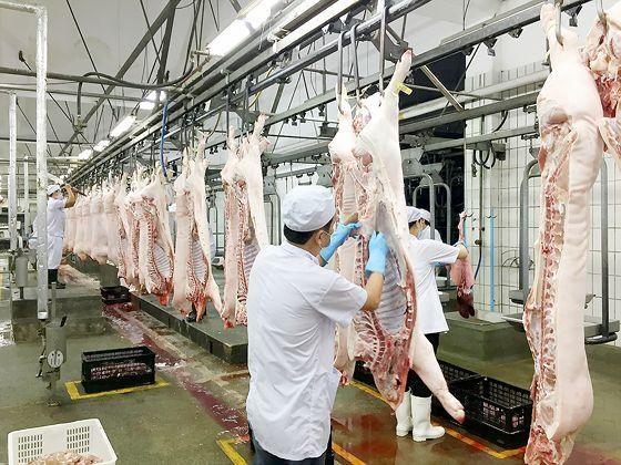 Le secteur vietnamien de la viande porcine vise de nouveaux debouches hinh anh 1