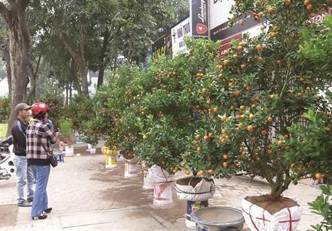 Escapade sur les marches aux fleurs du Tet a Hanoi hinh anh 1