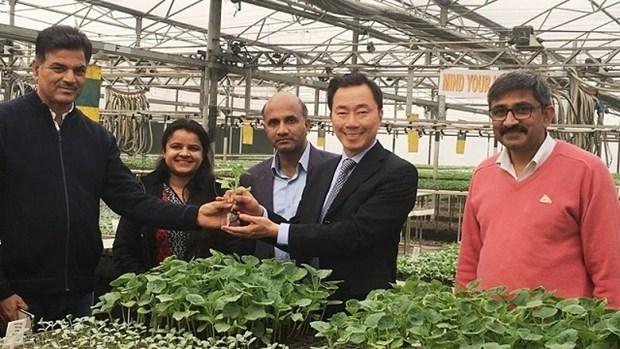 Vietnam - Inde : Riches potentiels de cooperation dans l'agriculture hinh anh 1