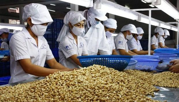 Le secteur de la noix de cajou cherche a accroitre la valeur des exportations hinh anh 1