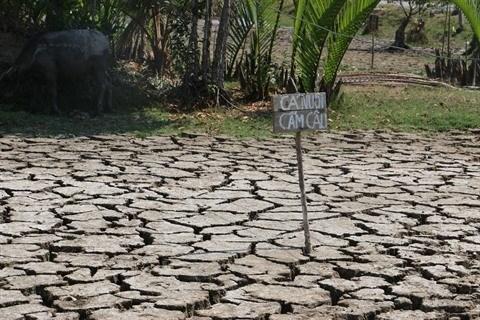Le delta du Mekong lutte contre la secheresse et la salinisation hinh anh 1