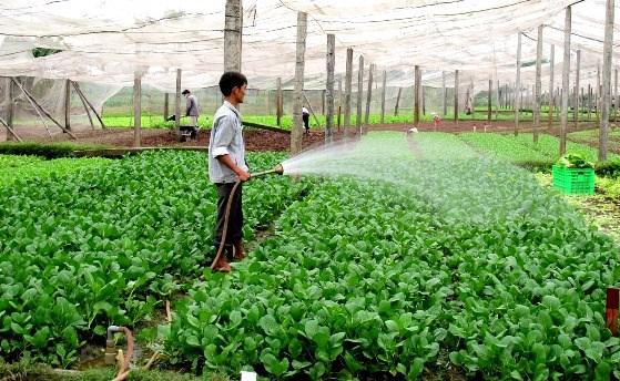 Le revenu des agriculteurs vietnamiens sera multiplie par 1,5 d'ici 2030 hinh anh 1