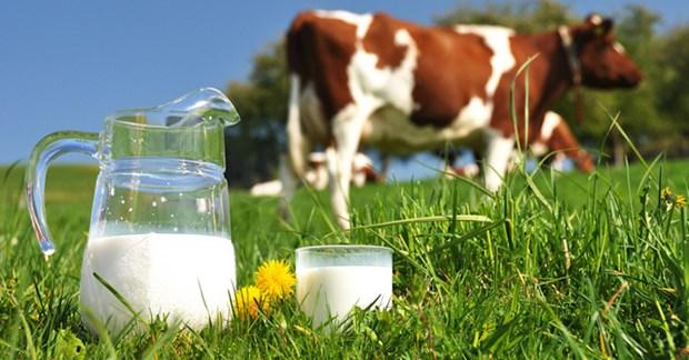 Vietnam Dairy : bientot la 2e edition a Ho Chi Minh-Ville hinh anh 1