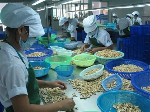 Environ 1,2 milliard de dollars d'exportations de noix de cajou hinh anh 1
