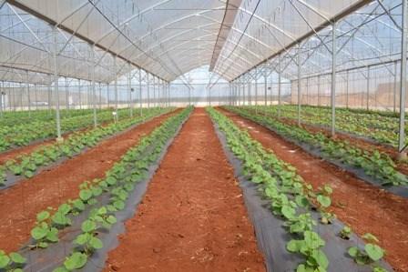 Can Tho et la Nouvelle-Zelande renforcent leur cooperation dans le secteur agricole hinh anh 1