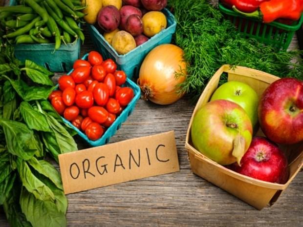 Mise en chantier du premier projet de produits agricoles organiques a Quang Tri hinh anh 1