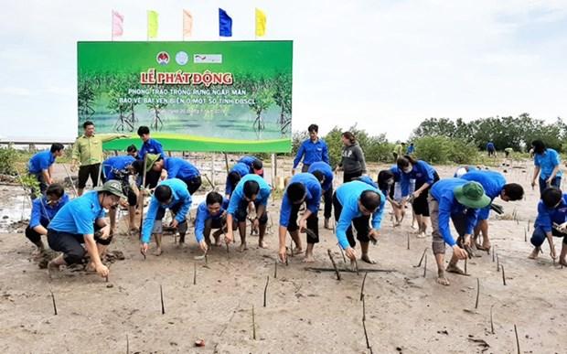 Ca Mau: planter les mangoves pour proteger les cotes hinh anh 1
