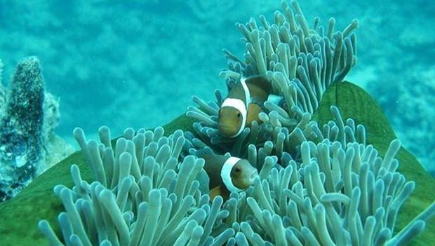Cinq lieux ou admirer les plus beaux recifs coralliens au Vietnam hinh anh 3