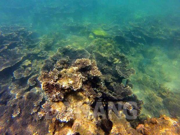 Cinq lieux ou admirer les plus beaux recifs coralliens au Vietnam hinh anh 4