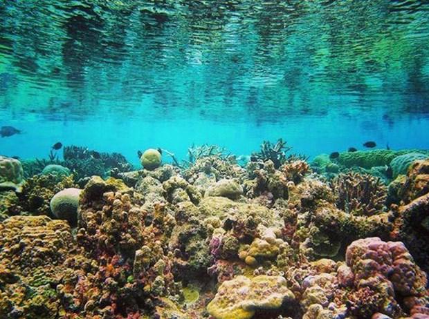 Cinq lieux ou admirer les plus beaux recifs coralliens au Vietnam hinh anh 5