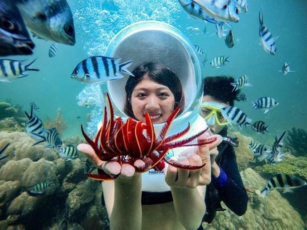 Cinq lieux ou admirer les plus beaux recifs coralliens au Vietnam hinh anh 1