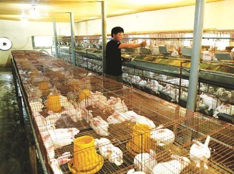 Fermes: la poule aux œufs d'or de Thanh Hoa hinh anh 1