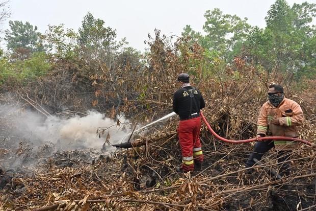 Indonesie : Fermeture forcee des ecoles et aeroports a cause des incendies de foret hinh anh 1