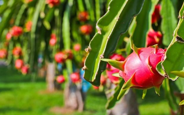 Dynamiser l'exportation de produits agricoles vietnamiens en Inde hinh anh 1