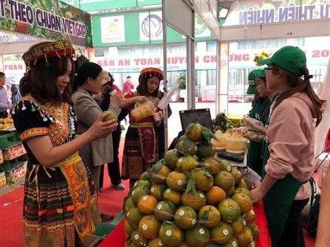 Bientot la Semaine des oranges de Ha Giang a Hanoi hinh anh 1