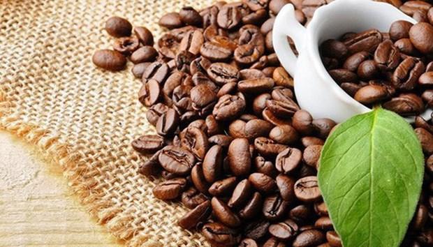 Elever la valeur ajoutee du cafe du Vietnam hinh anh 1
