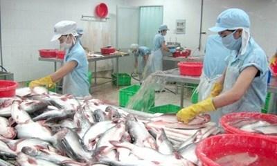 Les opportunites d'exportation du panga du delta du Mekong hinh anh 1