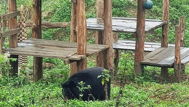 Ninh Binh: un refuge d'ours attrayant pour les touristes etrangers hinh anh 1