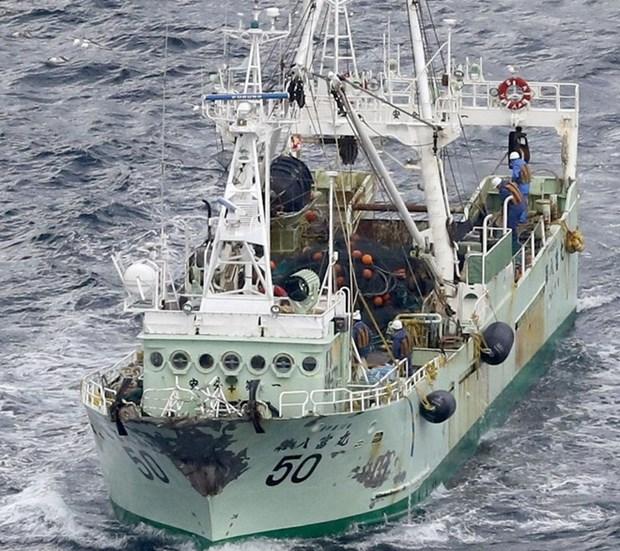 Cinq marins vietnamiens portes disparus apres le naufrage d'un cargo au large du Japon hinh anh 1