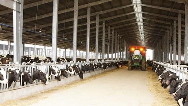 Le groupe vietnamien TH achete trois fermes d'elevage de betail en Australie hinh anh 1