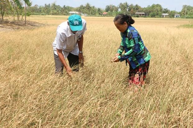 Les provinces du delta du Mekong recoivent de l'aide pour faire face a la secheresse  hinh anh 1