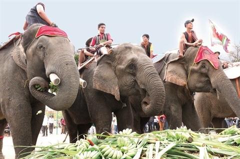 Fete des elephants au Tay Nguyen hinh anh 1