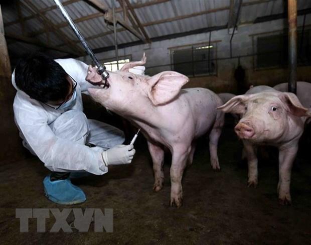 Le Vietnam exporte plus de 1 145 sortes de medicaments pour animaux hinh anh 1
