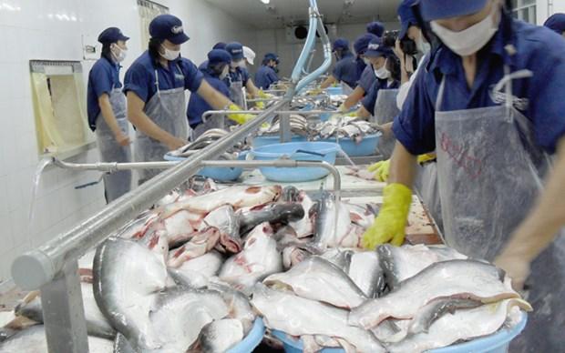 Pangasius: Hausse des exportations nationales a Singapour et au Royaume-Uni hinh anh 1