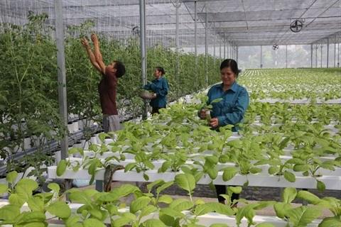 Hanoi appelle a investir dans des projets agricoles de haute technologie hinh anh 1