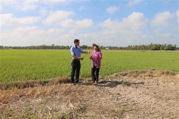 La secheresse et l'intrusion d'eau salee causent de grosses pertes a Tra Vinh hinh anh 1