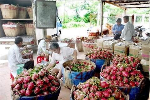 L'agriculture exporte plus de 32 milliards d'USD de produits en 2016 hinh anh 1