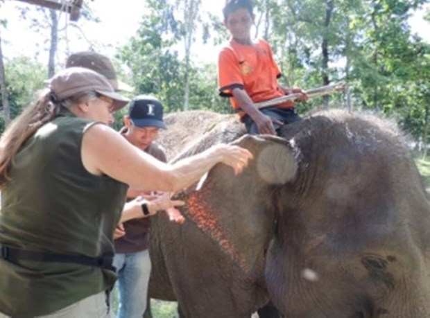 Les experts prennent la defense de l'elephant au Vietnam hinh anh 1