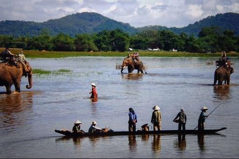 Les experts prennent la defense de l'elephant au Vietnam hinh anh 2
