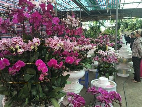 Le marche floral de Van Phuc bat son plein a l'approche du Tet hinh anh 2
