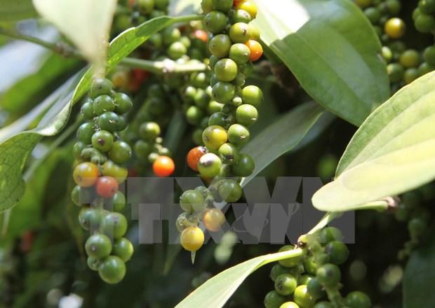 Le Vietnam invite l'Inde a reprendre certaines importations agricoles vietnamiennes hinh anh 1