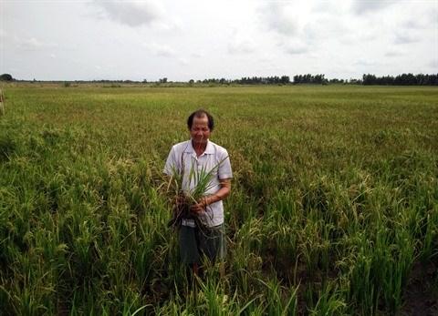 Face a la secheresse, le delta du Mekong entre en resistance hinh anh 2